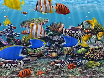 3D Fish School Screensaver